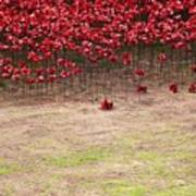 Rustic Poppy Garden Poster