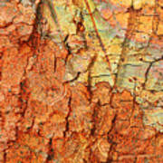 Rusty Bark Abstract Poster