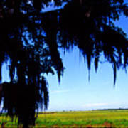 Sabine National Wildlife Refuge Along The Creole Nature Trail Poster