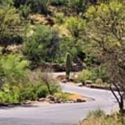 Sabino Canyon Road Poster
