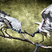 Sacred Ibis Photobombing Poster