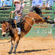 Saddlebronc 101 Poster