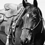 Saddled To Go Poster