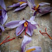 Saffron Flower Poster