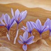 Saffron Flowers Poster