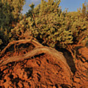 Sagebrush At Sunset Poster