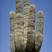 Saguaro 2 Poster