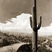 Saguaro Cactus 3 Poster