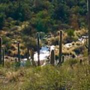 Saguaro Creek Poster