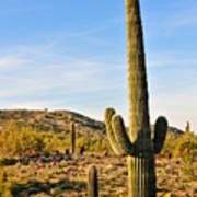 Saguaro Hill Poster
