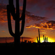 Saguaro Sunset Silhouette #2 Poster
