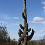 Saguaro With Extra Legs Poster
