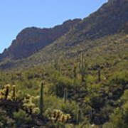 Saguaros And Other Greenery  Poster