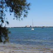 Sail Boat On Sarasota Bay Poster