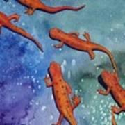 Salamanders Poster