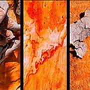 Salmon Gum Tree Triptych  #3 Poster