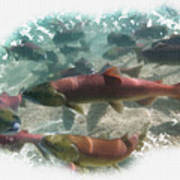 Salmon Migration Poster