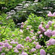 Pink Hydrangeas In Mirabell Garden Poster