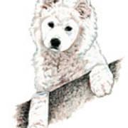 Samoyed Puppy Poster