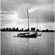 San Diego Bay Sailboats Poster