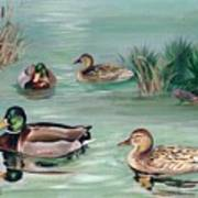 Sanctuary For Ducks Poster