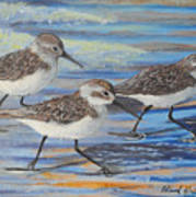 Sand Pipers Poster