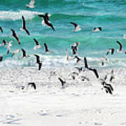 Sandestin Seagulls B Poster