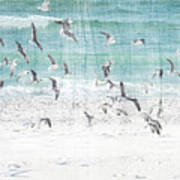 Sandestin Seagulls E Poster