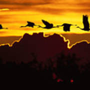 Sandhill Crane At Sunset Poster
