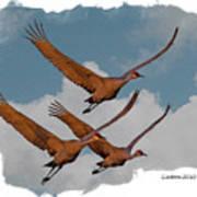 Sandhill Cranes 3 Poster