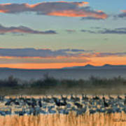 Sandhill Cranes And Snow Geese Poster