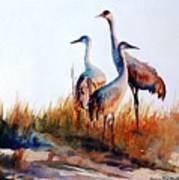 Sandhill Cranes Poster
