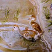 Sandhill Cranes Chicks First Bath Poster