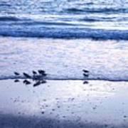 Sandpiper Beach I Poster