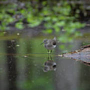 Sandpiper In The Smokies Poster