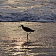 Sandpiper On A Golden Beach Poster