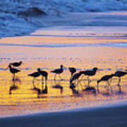 Sandpipers In A Golden Pool Of Light Poster