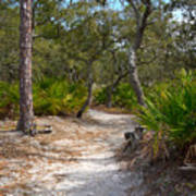 Sandy Path In Hunting Island South Carolina Poster