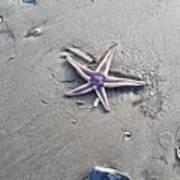 Sandy Star Poster