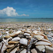Sanibel Island Sea Shell Fort Myers Florida Broken Shells Poster