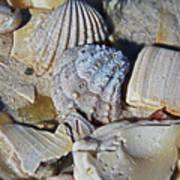 Sanibel Island Seashells Iv Poster