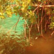 Sanibel Mangroves Poster
