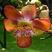 Sara Tree Flower Dthb104 Poster
