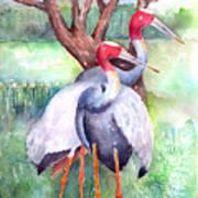 Sarus Cranes Poster