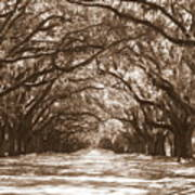 Savannah Sepia - Glorious Oaks Poster