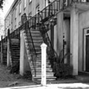 Savannah Steps Black And White Poster