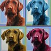 Savannah The Labradoodle Poster