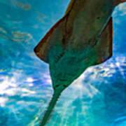 Sawfish Poster