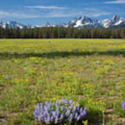 Sawtooths And Wildflowers Poster
