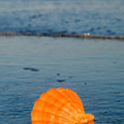 Scallop Seashell On The Beach Poster